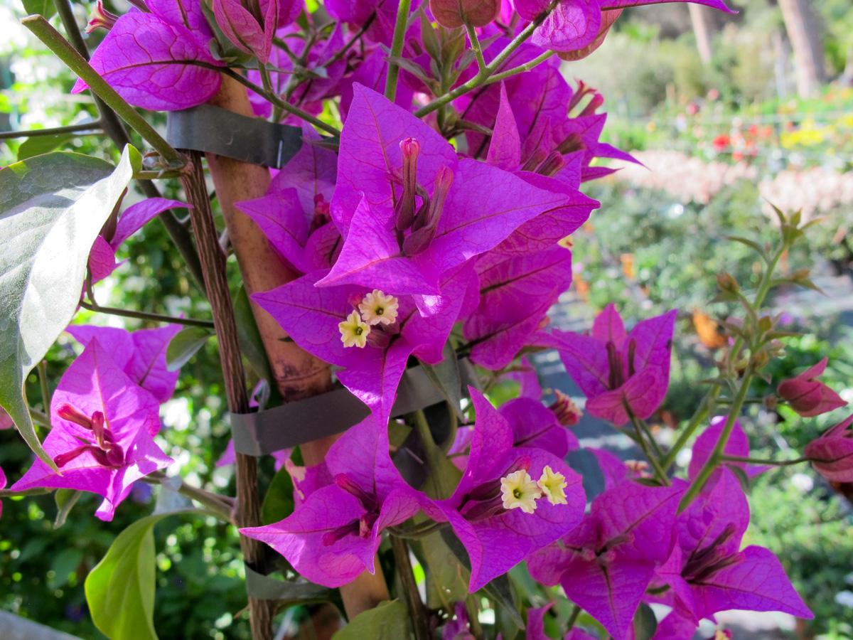 Fiori e piante for Piante e fiori